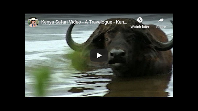 Kenya Safari Video - Africa Travelogue Part 5 | Lake Nakuru
