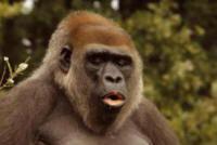 Gorillas through the Mist - Customized Safaris in Rwanda and Uganda - www.photo-safaris.com