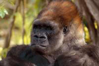 A Glimpse of Gorillas - Customized Safaris in Rwanda and Uganda - www.photo-safaris.com