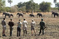 North Luangwa Walking Trails - Walking Safari in Zambia - www.photo-safaris.com