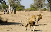 South Luangwa Walking Safaris - Walking Safari in Zambia - www.photo-safaris.com