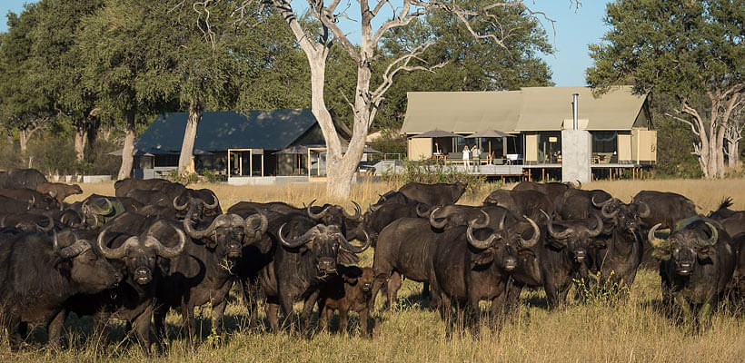 Linkwasha Camp (Hwange Game Reserve) Zimbabwe - www.photo-safaris.com
