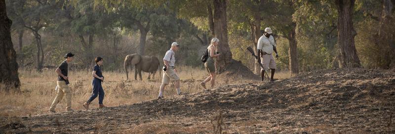 Zambezi Expeditions, Mana Pools - www.photo-safaris.com